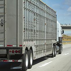 Truck-livestock-250